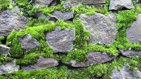 Fondo cubierto de musgo de la textura de la pared de piedra foto de archivo