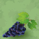 Fondo d'annata con l'uva nera Fotografie Stock Libere da Diritti
