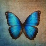 Fondo d'annata con la farfalla Fotografia Stock