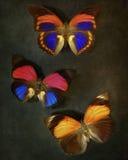 Fondo d'annata con le farfalle Fotografia Stock