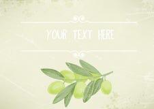 Fondo d'annata con un ramo di ulivo verde, posto per testo Fotografia Stock