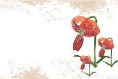 Fondo d'annata del fiore Immagini Stock