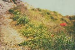 Fondo d'annata della natura Fotografia Stock