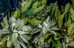 Fondo d'annata delle foglie verdi fresche delle spezie differenti Rosmarini, foglia di alloro, oliva, rami di ulivo, basilico in  Immagine Stock