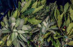 Fondo d'annata delle foglie verdi fresche delle spezie differenti Rosmarini, foglia di alloro, oliva, rami di ulivo, basilico in  Immagine Stock Libera da Diritti