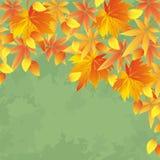 Fondo d'annata di autunno, caduta della foglia Fotografie Stock