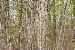 Fondo da branches Bello paesaggio, priorità bassa del sottobosco sottobosco Fotografia Stock