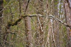 Fondo da branches Bello paesaggio, priorità bassa del sottobosco sottobosco Immagine Stock