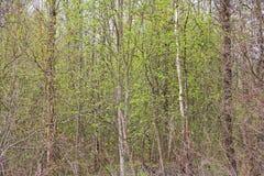 Fondo da branches Bello paesaggio, priorità bassa del sottobosco sottobosco sottobosco, boscaglia, sottobosco, bosco ceduo, Immagine Stock Libera da Diritti
