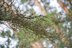 Fondo da branches Bello paesaggio, priorità bassa del sottobosco sottobosco sottobosco, boscaglia, sottobosco, bosco ceduo, Immagini Stock