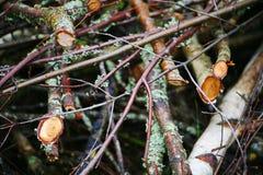 Fondo da branches Bello paesaggio, priorità bassa del sottobosco sottobosco sottobosco, boscaglia, sottobosco, bosco ceduo, Immagine Stock