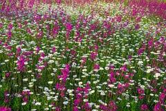 Multi fiori colorati che sbocciano su un prato fotografia for Fiori che sbocciano