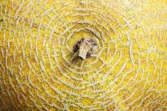 Fondo dal melone giallo Fotografie Stock Libere da Diritti