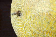 Fondo dal melone giallo Fotografie Stock