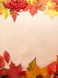 Fondo dalle foglie di autunno Fotografie Stock Libere da Diritti