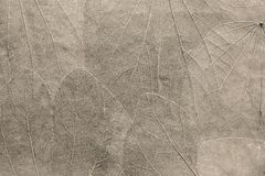 Fondo dalle foglie di colore beige pallido Immagini Stock Libere da Diritti