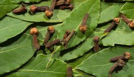 Fondo dalle foglie e dal garofano dell'albero di Green Bay Fotografia Stock Libera da Diritti
