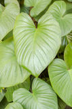 Fondo dalle foglie verdi Immagine Stock Libera da Diritti