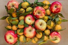 Fondo dalle mele e dai mandarini rossi sui rami con le foglie Immagini Stock