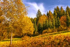Fondo de árboles en colores del otoño Imagen de archivo