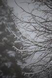 Fondo de árboles helados en invierno en los Pirineos Fotografía de archivo libre de regalías