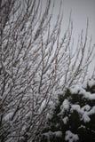 Fondo de árboles helados en invierno en los Pirineos Imagen de archivo