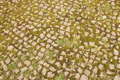 Fondo de adoquines con la hierba en el centro de ciudad Fotos de archivo libres de regalías