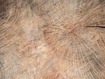 Fondo de anillos de la madera cortada Fotografía de archivo libre de regalías
