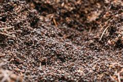 Fondo de Ant Colony Formica Rufa rojo Fotos de archivo libres de regalías
