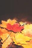Fondo de Autumn Fall con las hojas de oro coloridas con la copia s Foto de archivo libre de regalías