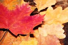 Fondo de Autumn Fall con las hojas de oro coloridas con la copia s Fotografía de archivo libre de regalías