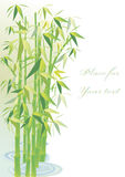Fondo de bambú Fotografía de archivo libre de regalías