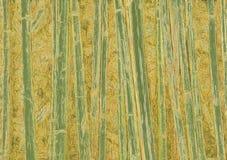 Fondo de bambú abstracto stock de ilustración