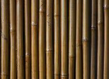 Fondo de bambú barnizado Imagen de archivo libre de regalías