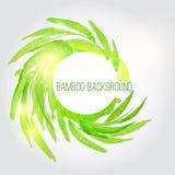 Fondo de bambú de la acuarela del vector con verde Imagen de archivo