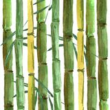 fondo de bambú del Mano-dibujo con las hojas ilustración del vector