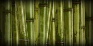Fondo de bambú duro ancho imagen de archivo libre de regalías