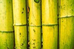 Fondo de bambú entonado y pintado con los círculos en el medio de cada pilón Fotos de archivo