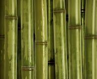 Fondo de bambú fino fotos de archivo