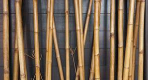 Fondo de bambú amarillo de la cerca en la madera negra Fotos de archivo libres de regalías
