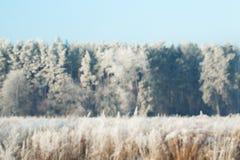 Fondo de Blured del bokeh nevoso del invierno del bosque Foto de archivo