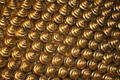 fondo 025 de cáscaras de oro Foto de archivo