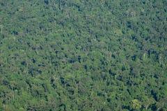 Fondo de color verde oscuro de la textura del árbol de la selva del bosque Foto de archivo libre de regalías
