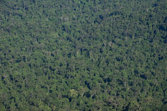 Fondo de color verde oscuro de la textura del árbol de la selva del bosque Imagen de archivo