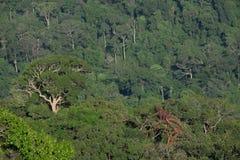 Fondo de color verde oscuro de la textura del árbol de la selva del bosque Fotos de archivo libres de regalías
