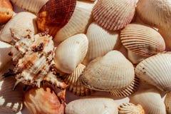 Fondo de conchas marinas mediterráneas marinas fotos de archivo libres de regalías