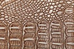 Fondo de cuero de Brown Foto del primer Piel del reptil Imagen de archivo libre de regalías