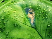 Fondo de Eco Imagen de archivo