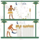 Fondo de Egipto antiguo El hombre siembra trigo en el campo Un hombre cosecha una cosecha del trigo en el campo Antecedentes hist fotos de archivo
