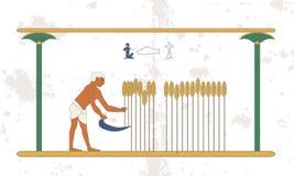 Fondo de Egipto antiguo Un hombre cosecha una cosecha del trigo en el campo Antecedentes históricos Gente antigua fotos de archivo libres de regalías